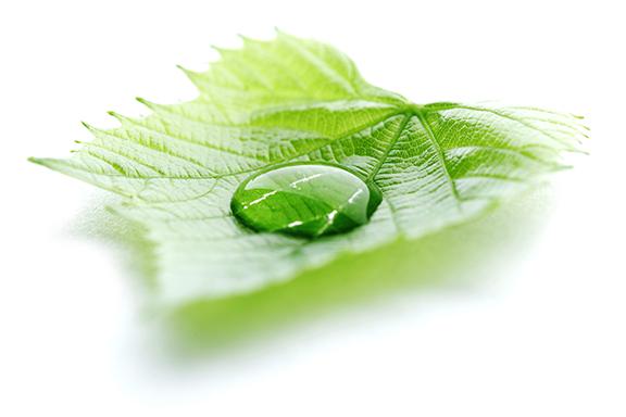 leaf-water